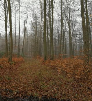 Waldbegehung am 26.01.2020